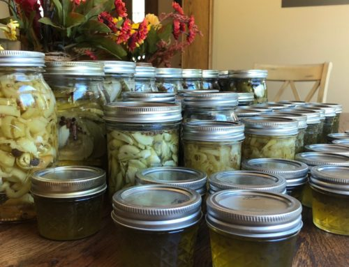 Canning and Pickling – our New Jam