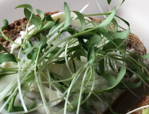I'm Hooked on Microgreens